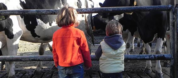 Kijken naar de koeien